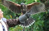 Falconry at Ashford Castle