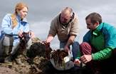 Ring of Kerry Seaweed Ireland Tours